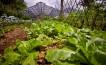 Kebun Organik2